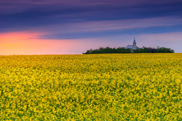 Church and field of rapeseed at sunrise,Transylvania,Romania