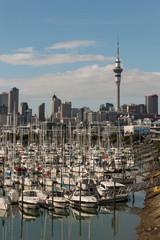 yachts in Auckland marina