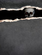 Human skull and paper texture