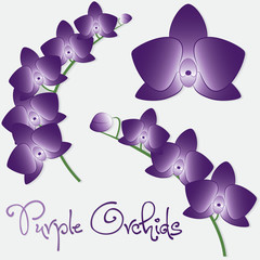 Orchid flower set in vector format.