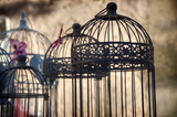 Birds cages - Nostalgia poster