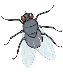 Vector Cartoon Fly