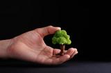1本の木と人間の手
