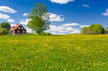 Swedish farm in May