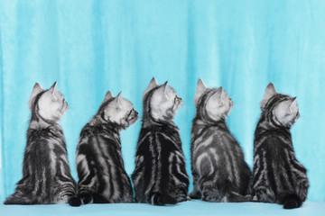 Fünf Kätzchen von hinten schauen seitlich