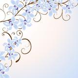 orhidee,floral,blüte,blume, pflanze,botanik,frühling