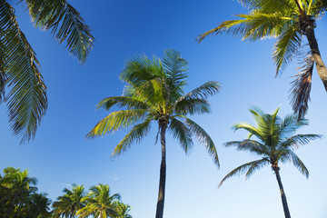 Tropic Caribbean