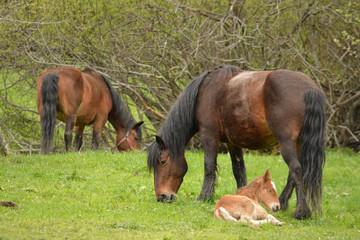 caballos y crias en un prado de hierba verde en verano