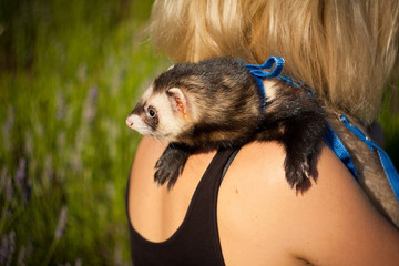 ferret on the shoulder
