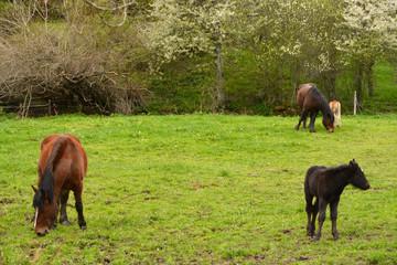 caballos en un campo de hierba verde en verano