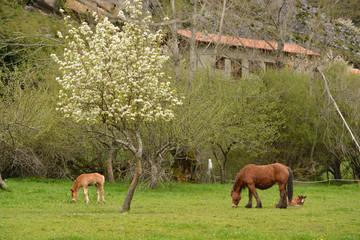 caballo y cria en un prado de hierba verde en primavera