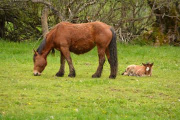 yegua y cria en un prado de hierba verde en primavera