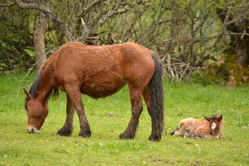 yegua y potro pastando en un prado de hierba verde en verano