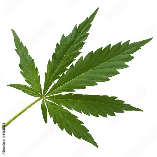 Leinwanddruck Bild hanf, cannabis,