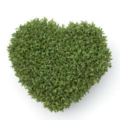 Kresseherz, Kresse, Gartenkresse; Lepidium Sativum;