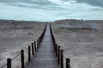 Wide dune