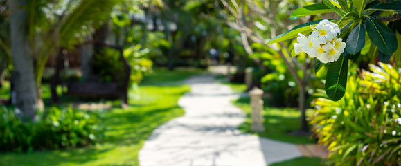 Tropical resort background