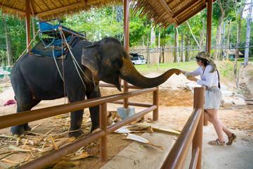 Young woman feeding elephant