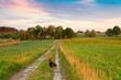 Beautiful rural landscape with dog at sunset