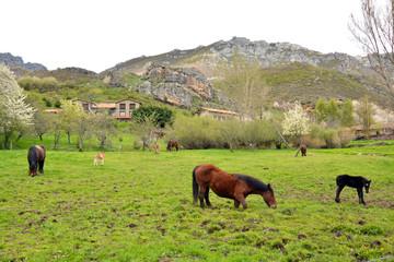 prado con hierba verde con caballos en primavera, asturias