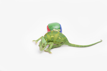 A chameleon next to a juggling ball in a studio