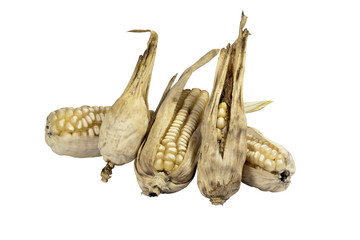 Four Dried Ears of Corn from Failed Crop