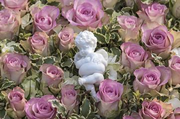 Rosa Rosen und Engel