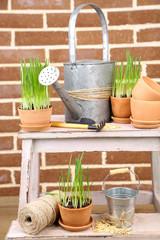 Green grass in flowerpots and gardening tools