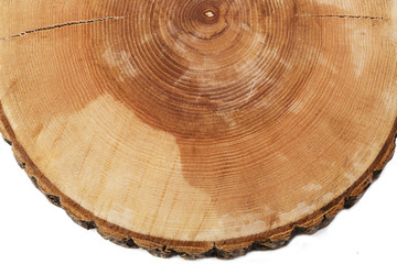 cut tree growth rings