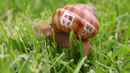 Snail with windows of its shell, real estate concept