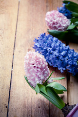 Beautiful hyacinth flowers on old wooden background