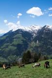 Bergalm, Südtirol, Italien