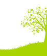 Wiese Baum