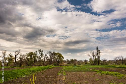Сельский огород