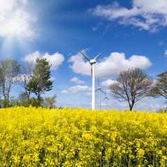 Rapsfeld im Frühjahr