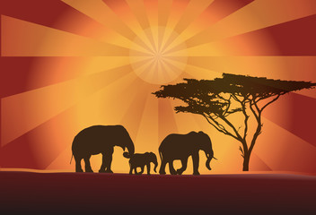 Africa elephants silhouette, tree and sun, vector illustration