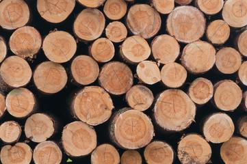 Holzindustrie, Kiefernholz, Baumstämme, Festmeter