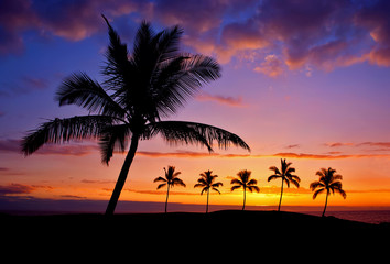 Hawaiian palm tree silhouette sunset on Big Island