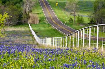 Texas Bluebonnets and wildflowers along a rolling road