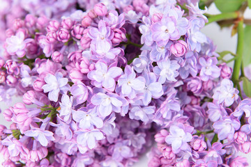 Beautiful lilac flowers close-up