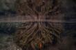 Underwater Roots - 64647787