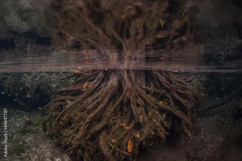 Deurstickers Water planten Underwater Roots