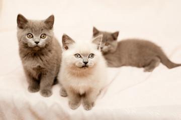 Sitting kittens