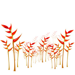 Heliconia flower background