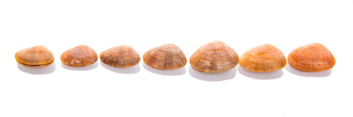 A group of seashells over white background