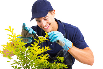 gardener pruning a plant on white