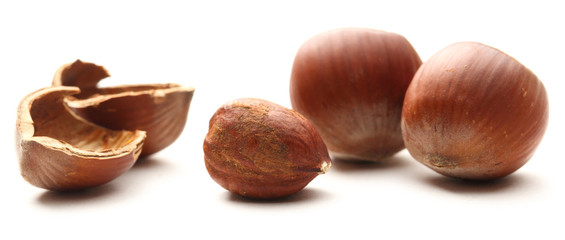Fresh brown hazelnut