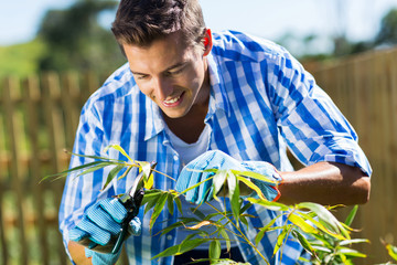 young man pruning a plant