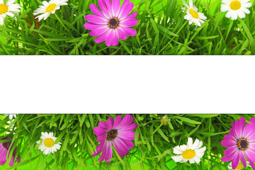 Banner on grass, pink and white flowers background