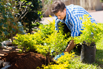 young man transplanting a new plant